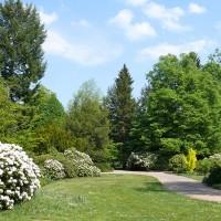 Rhododendronblüte im Großen Garten ©die-infoseiten.de e.K